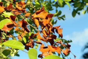 foliage-dries-621724_640