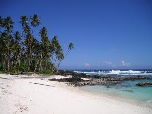 palm-trees-59_640