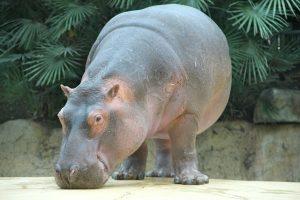 zoo-24928_640