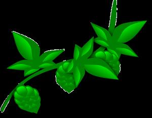 hops-146693_640