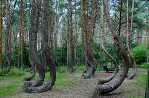 crooked-forest-866294_640